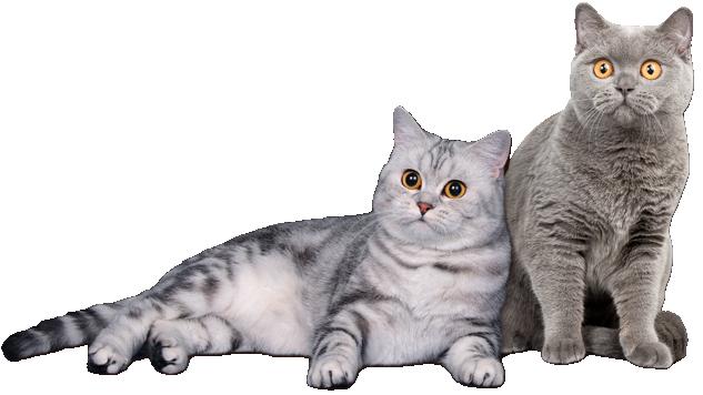ROYAL CANIN RENAL Select Feline Ренал Селект (2 кг